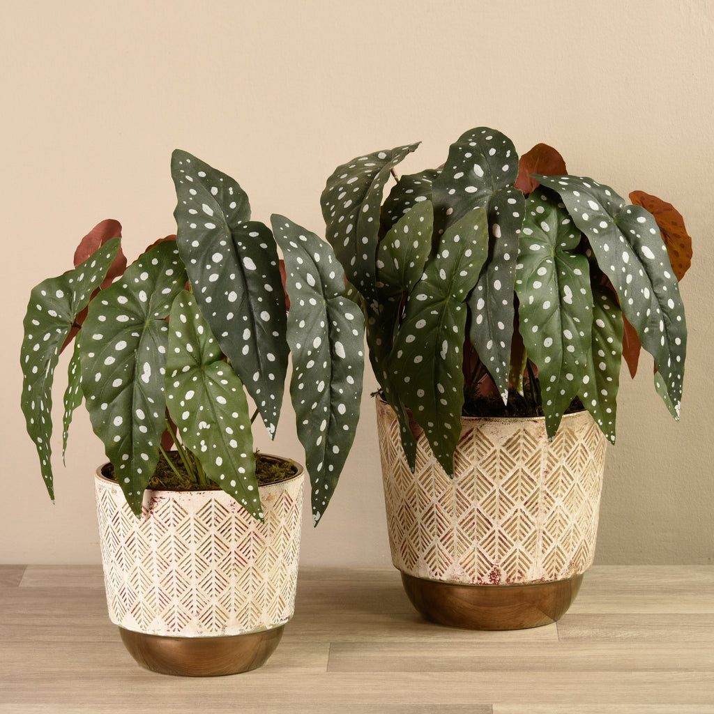 Bloomr-USA Plants Potted Begonia Maculata artificial flowers artificial trees artificial plants faux florals