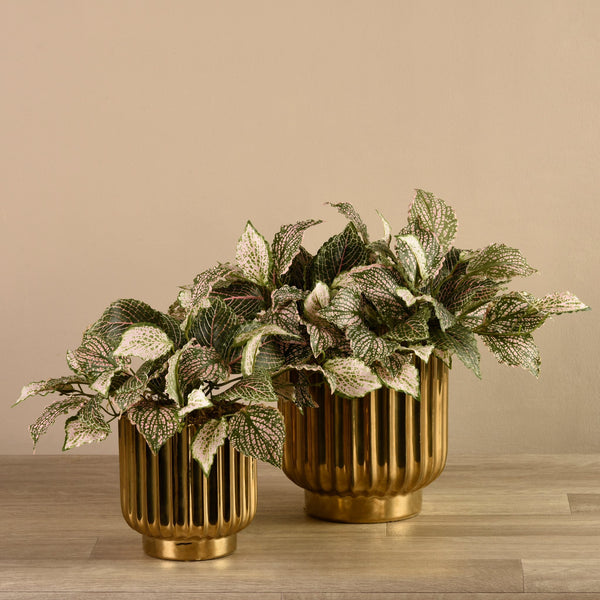 Bloomr-USA Plants Potted Fittonia artificial flowers artificial trees artificial plants faux florals