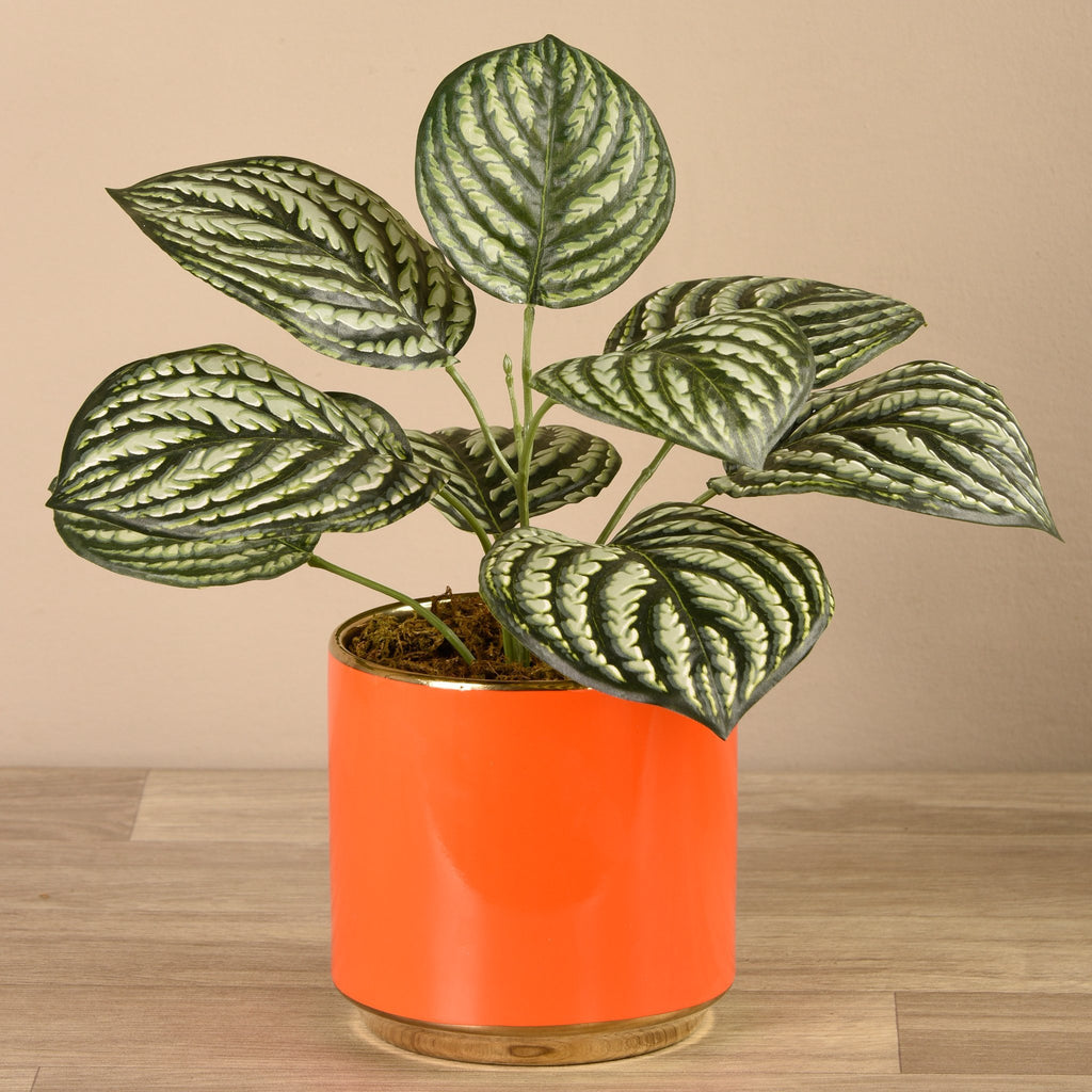 Bloomr-USA Plants Potted Peperomia artificial flowers artificial trees artificial plants faux florals