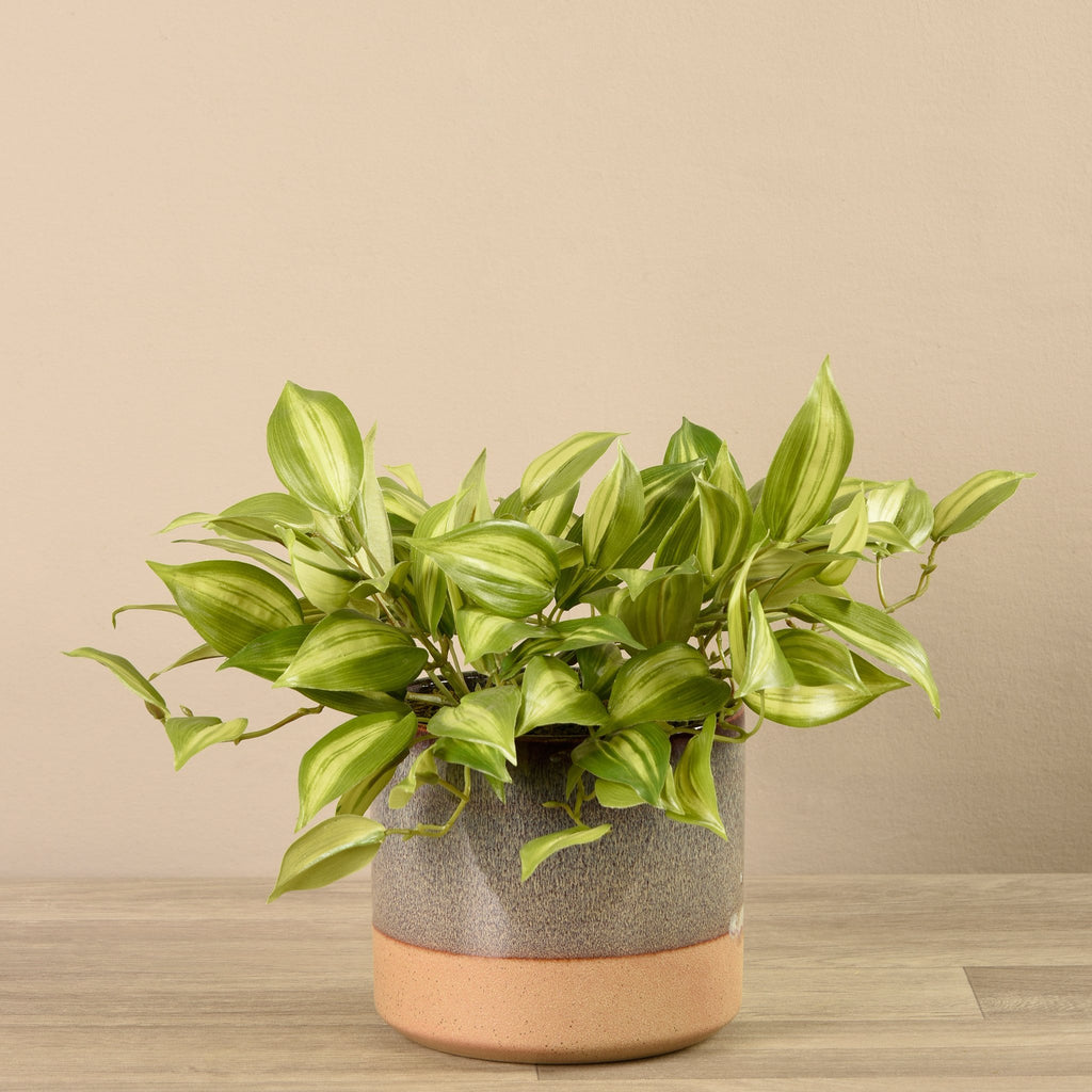Bloomr-USA Plants Potted Vanilla Plant artificial flowers artificial trees artificial plants faux florals