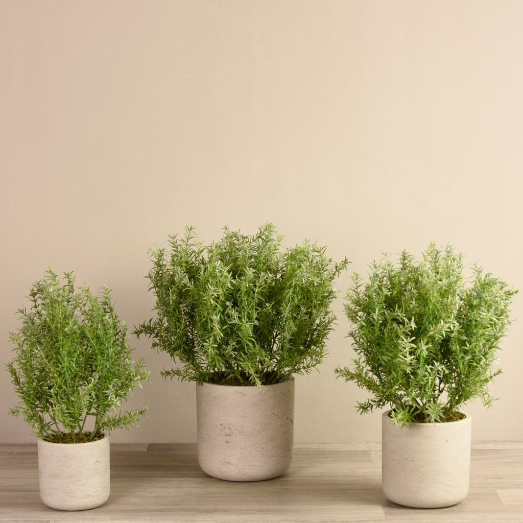bloomr-usa Plants Small Potted Asparagus artificial flowers artificial trees artificial plants faux florals