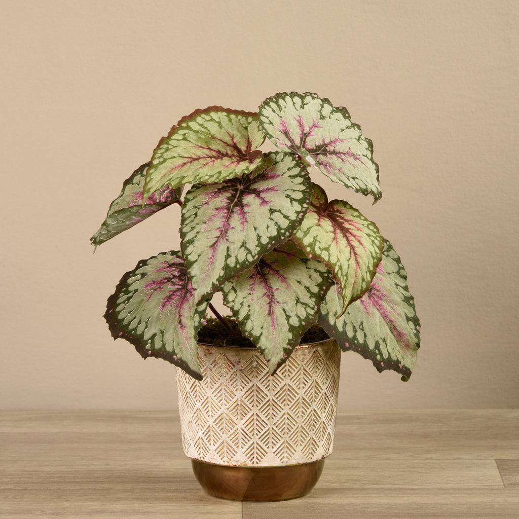 Bloomr-USA Plants Small Potted Begonia artificial flowers artificial trees artificial plants faux florals
