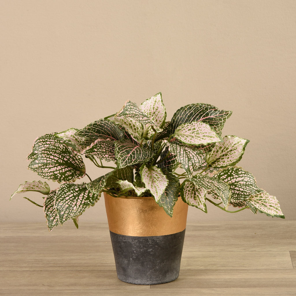 Bloomr-USA Plants Small Potted Fittonia artificial flowers artificial trees artificial plants faux florals