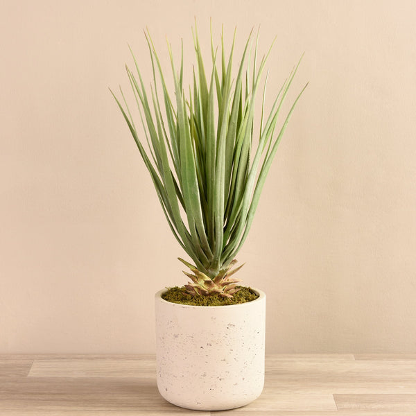 Bloomr-USA Plants Small Yucca Palm in Concrete Pot artificial flowers artificial trees artificial plants faux florals