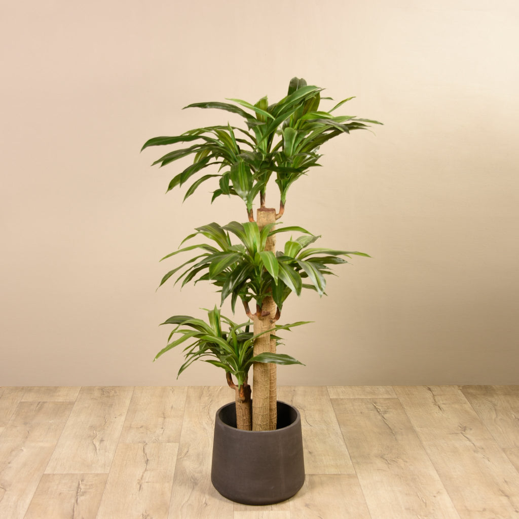 Bloomr-USA Trees Draecena artificial flowers artificial trees artificial plants faux florals