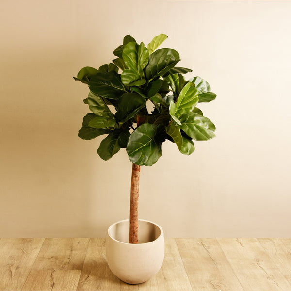 Bloomr-USA Trees Fiddle Leaf Tree artificial flowers artificial trees artificial plants faux florals