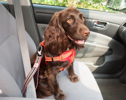Long Paws Comfort Dual Use Car Safety Belt & Traffic Lead
