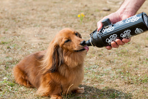 Long Paws Dog Travel Water Bottle in Matte Black - 250ml to 750ml
