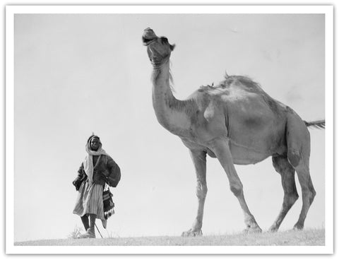 Bedouin man with camel; circa 1920 to 1933