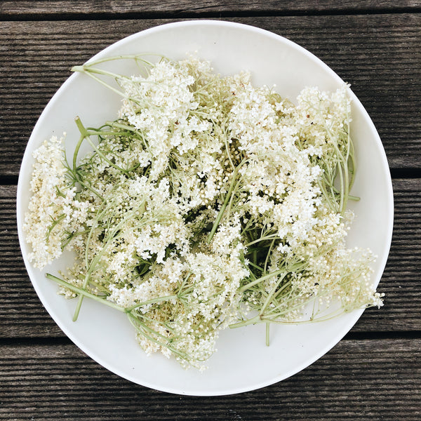 Elderflower foraging
