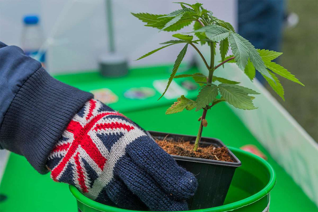 Medical Cannabis Can Be Prescribed In The UK From November 1st 2018