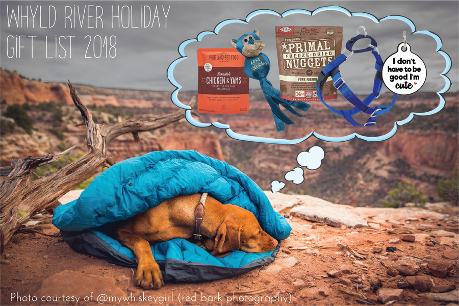 The Top 5 Gifts for your Adventure Dog
