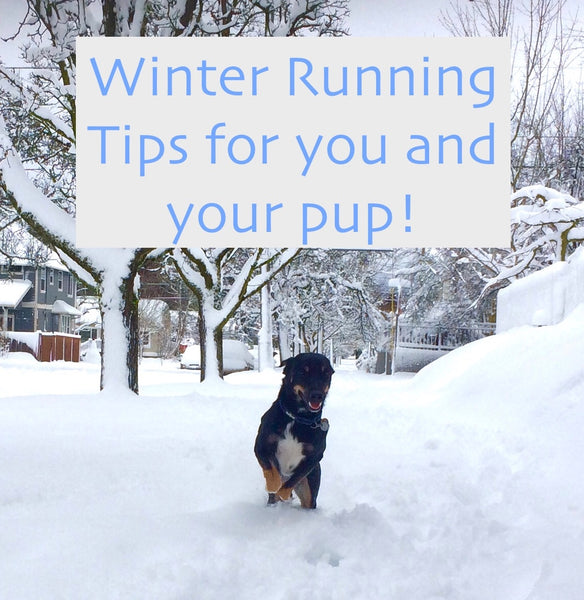 Winter running with your dog