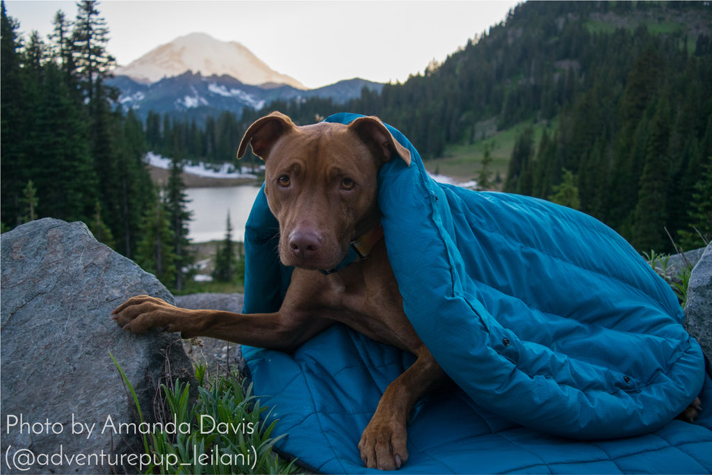 Adventure Pup Leilani and WHyld River - dog sleeping bag and travel bed DoggyBag