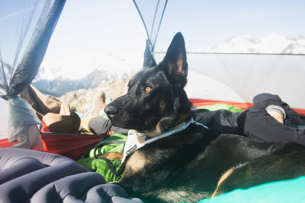 Dog Sleeping Bag Review She and the Shepherd Whyld River's DoggyBag
