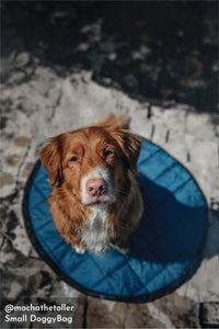 Whyld River's Sleeping Bag for Adventure Dogs