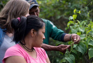 Nunaia Founder visiting our growers in the Peruvian Rain-forest where the serum ingredients are sustainable sourced