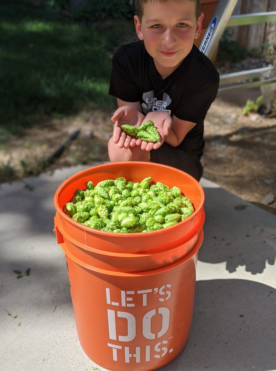 Growing and Brewing with Homegrown Hops