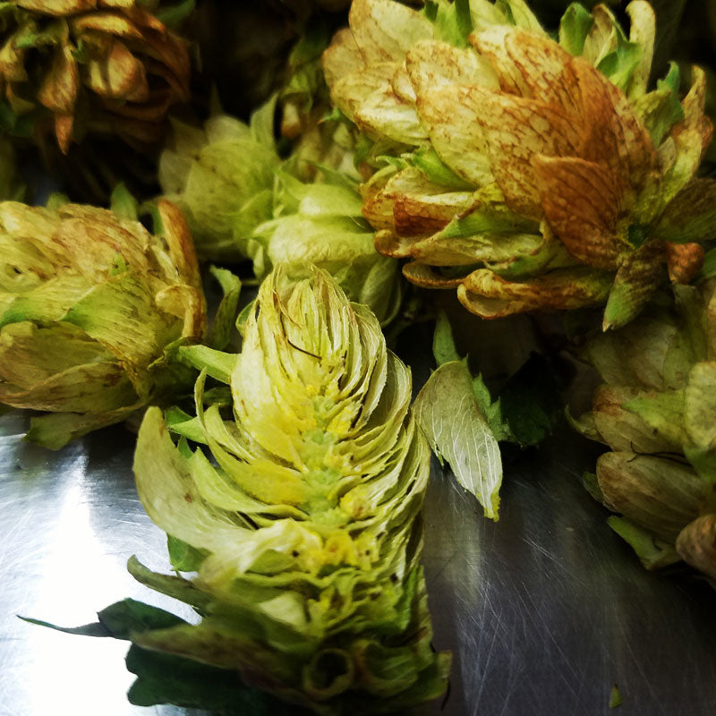 Hop Series Volume 2:  Getting What You Want From Your Hops