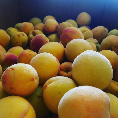 Fresh Peaches to use in conjunction with Peach Flavoring