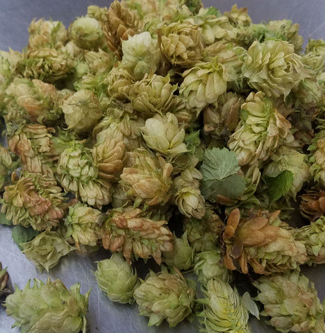Fresh Hops Measured and Ready for Dry Hopping