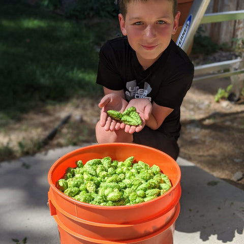 Brewing with Wet Hops Ready for the Boil