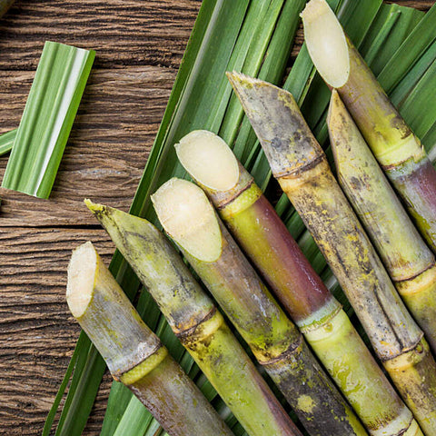 Sugarcane Before the Boiling Process