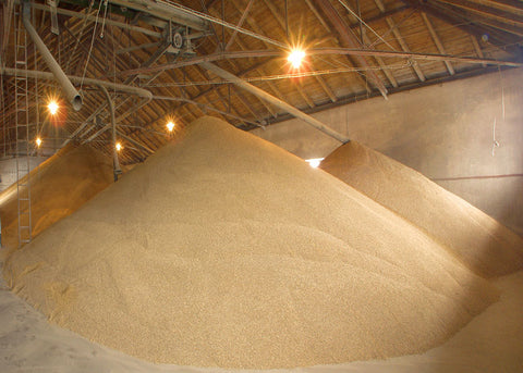 Malthouse Floor at Regional Malting Facility