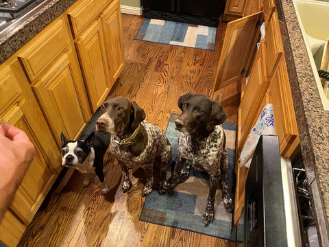 Jeff's Dogs waiting for their upcycled dog treats