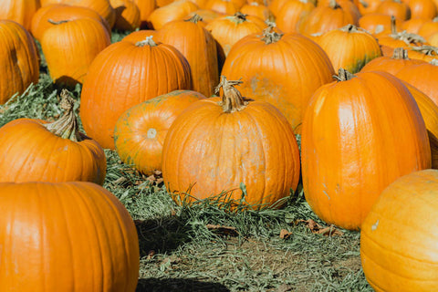 Pumpkins At Rest