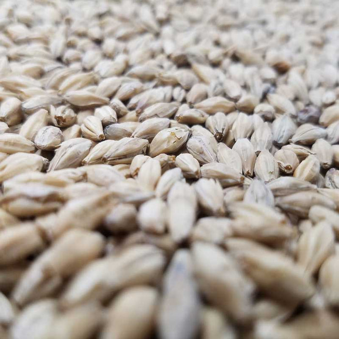 Floor Malted Bohemian Pilsner Malt from Weyermann Malting Company Germany