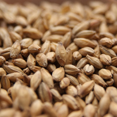 American Distiller's 6 Row Malt, Base Malts - BrewChatter HomeBrew Supply