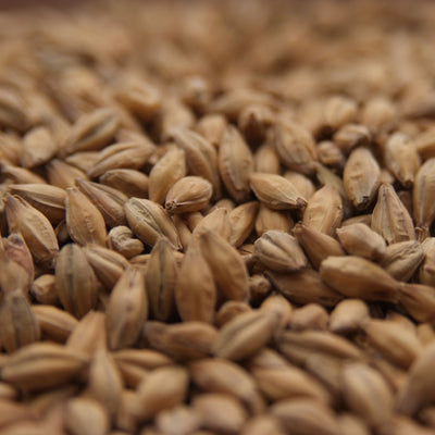 Biscuit Malt, Specialty Grains - BrewChatter HomeBrew Supply