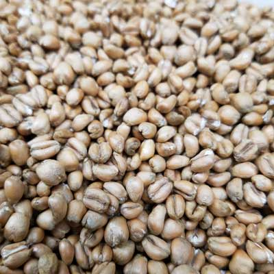 Torrefied Wheat, Specialty Grains - BrewChatter HomeBrew Supply