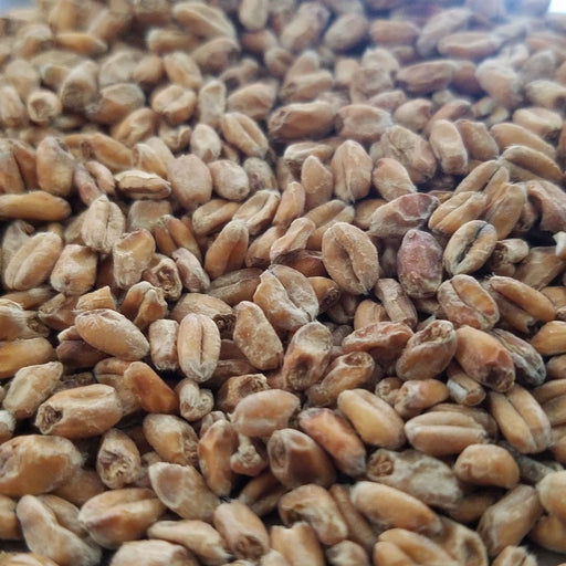 Weyermann Dark Wheat Malt 1 lb per pound