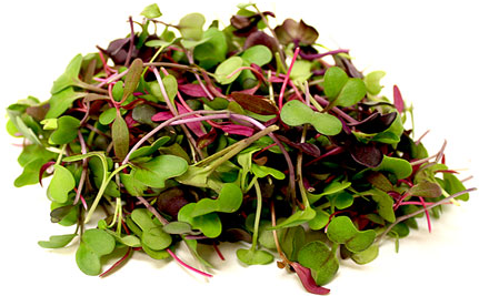 Acre 10 Gourmet Microgreen Mix (Clamshell)