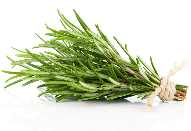 Rosemary Herb (1oz.)