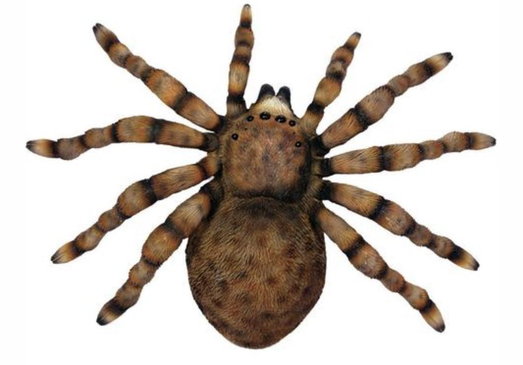 TARANTULA WALL PLAQUE FUN! Streamline