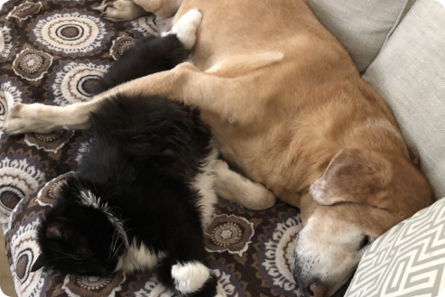 A cat and a dog are sleeping together on the couch.