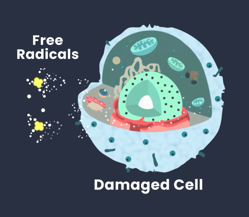 A preview image of a video representing free radicals, how they turn to oxidative stress and harm our health.