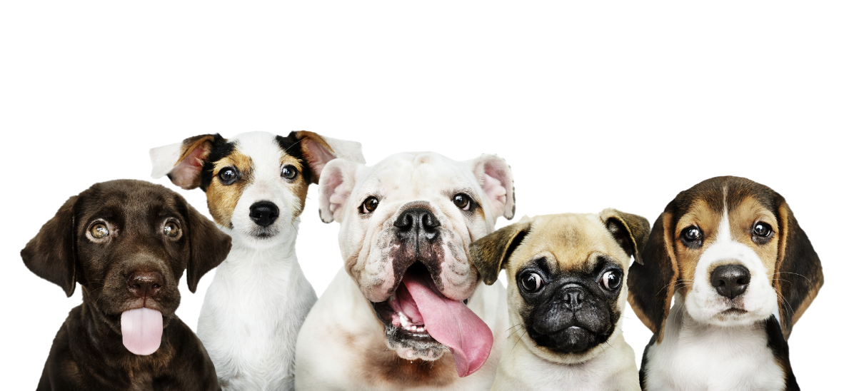 An image of five adorable dogs in different breeds all lined up for a group picture
