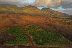 Featured in Marin Magazine-Maui Kuʻia Estate Chocolate