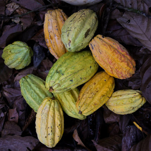 From Ecuador to Maui-Maui Kuʻia Estate Chocolate