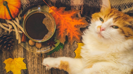 Coffee, Bacon, and Eggs Might Have Kept One Cat Alive for 38 Years