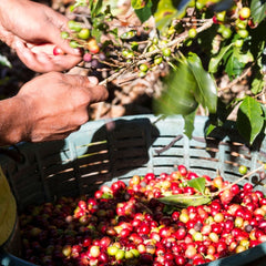 the story behind making coffee
