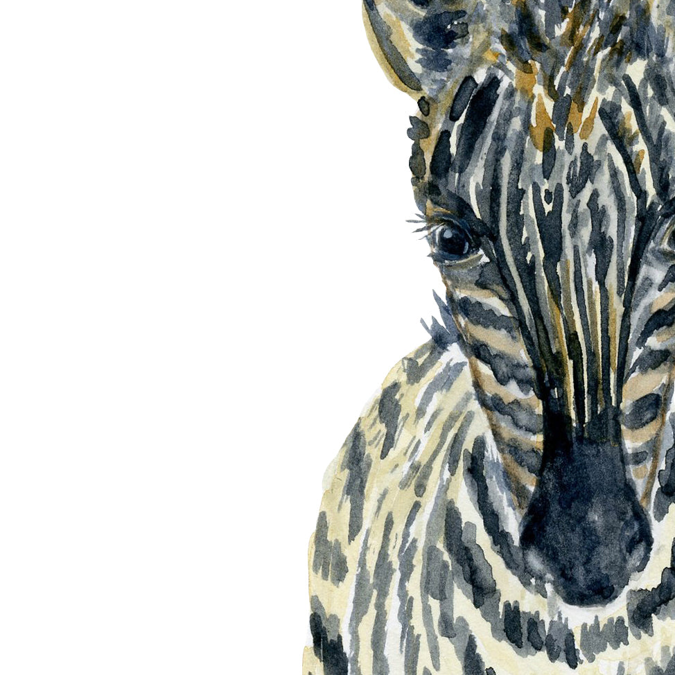 watercolor baby zebra print, nursery print, instant download