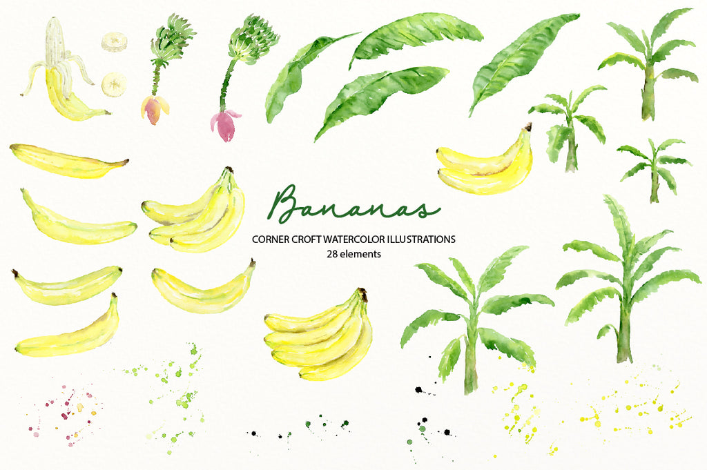 watercolor banan leaf, banan tree, banana flower, banana plant