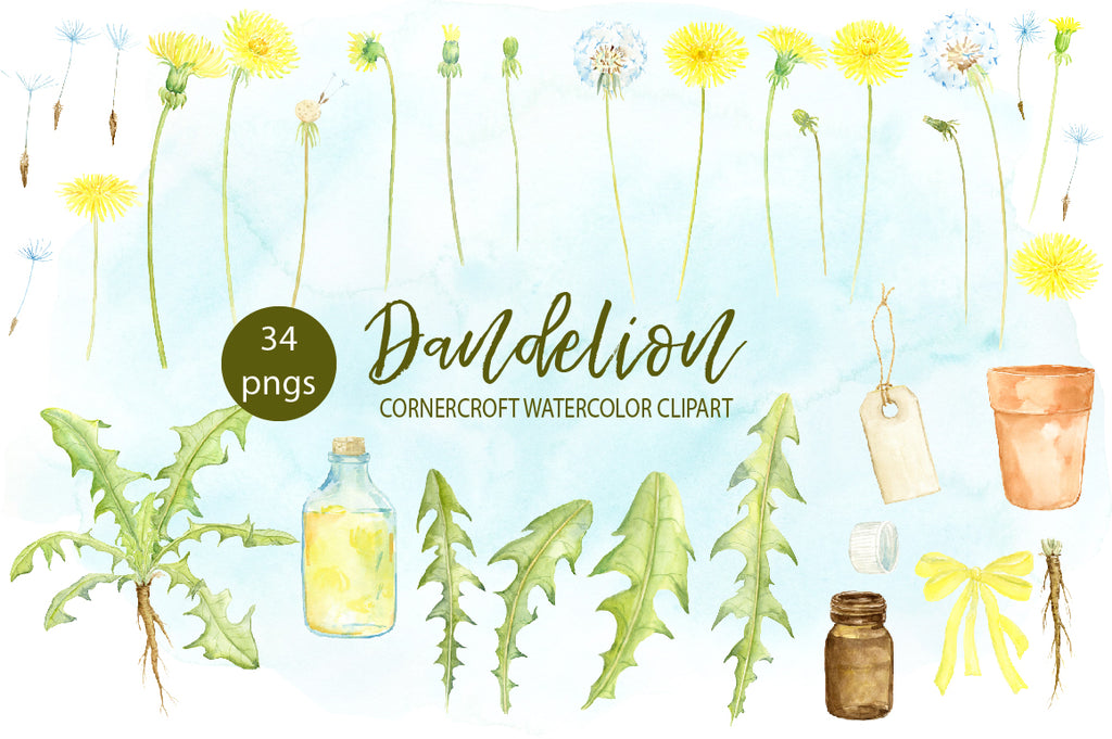 dandelion clipart, watercolor dandelion illustration, yellow flower, flower bud, dandelion plant, dandelion seed