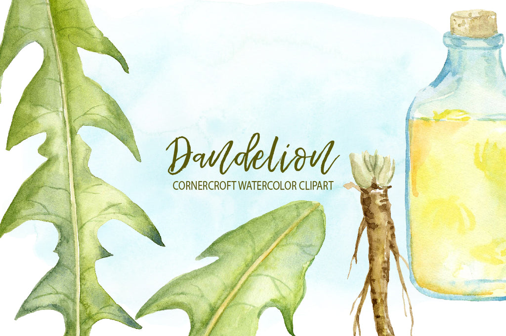 watercolor dandelion illustration, medicinal plant, herb, yellow flower