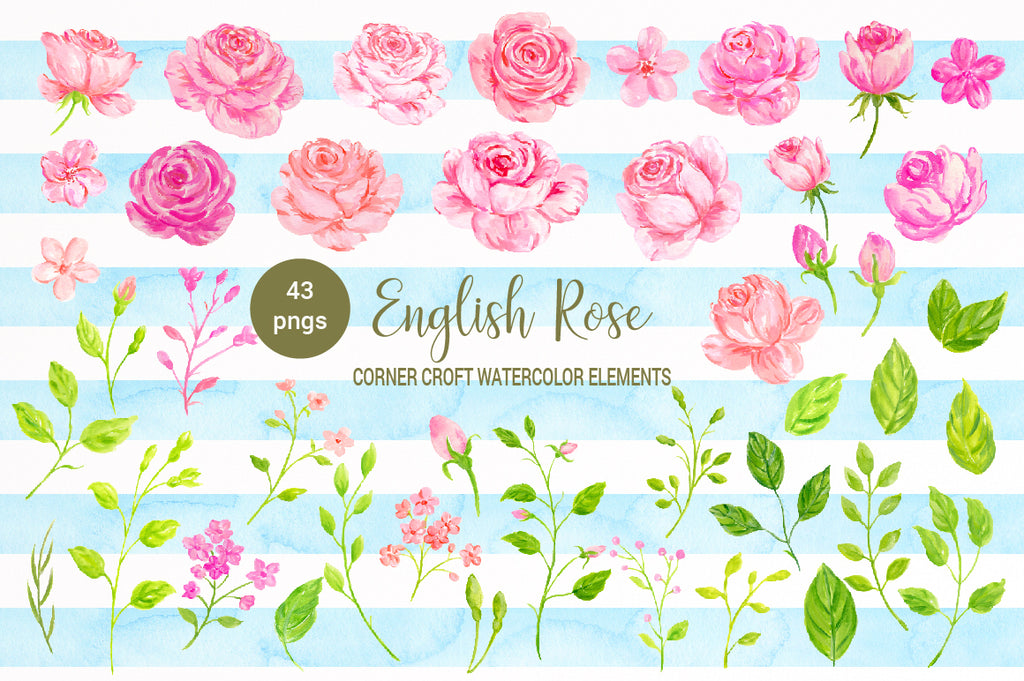 watercolor illustration of cottage rose, pink rose, peach rose, instant download